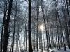 6: Lichtspiel im Winterwald