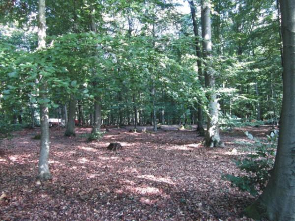 Das Bild zeigt einen Blick in den Wald