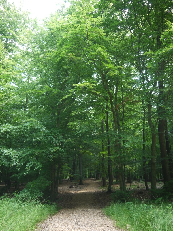 Der Seiteneingang des RuheForstes, ein Waldweg unter dichtem Blätterdach