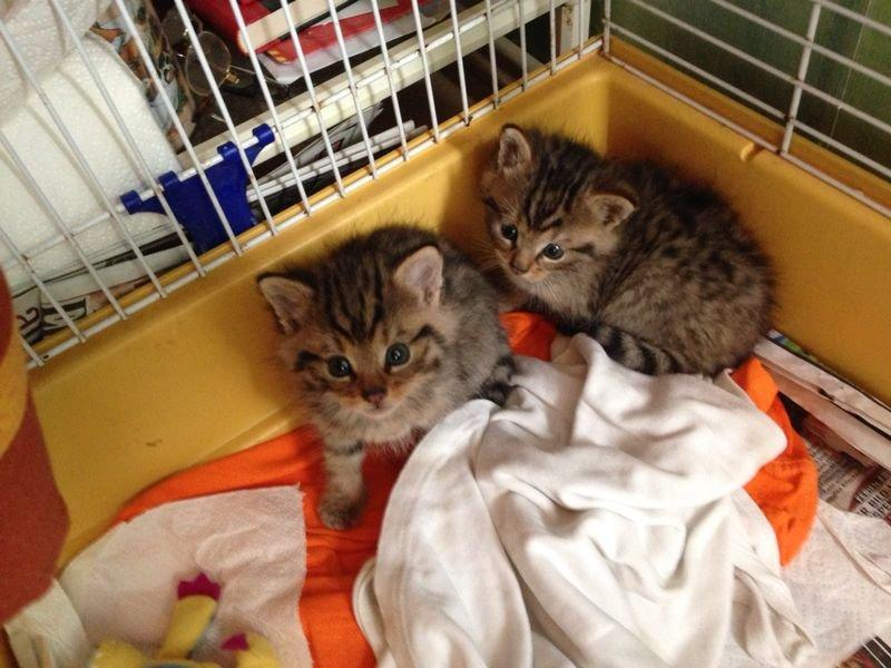 Das Foto zeigt die Wildkatzenbabys in der Transportbox