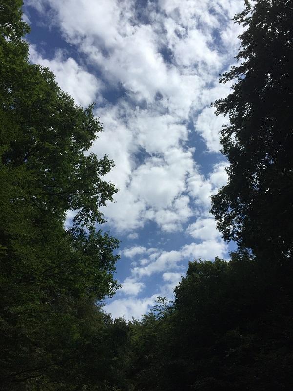 Bild Blick in den Himmel
